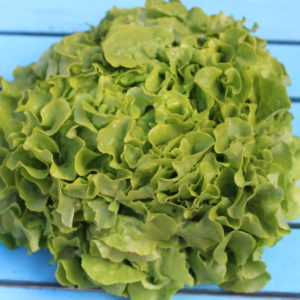 Eichblatt grün Holzer