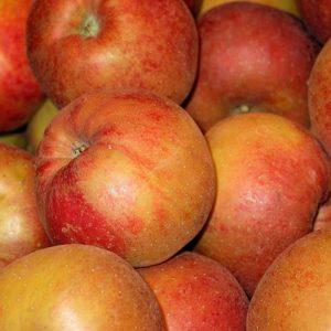 Apfel roter Boskoop Rarität!