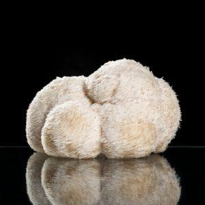 Pom Pom Blanc