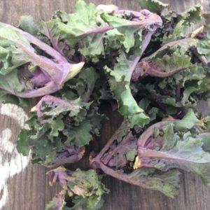 Flower Sprouts demeter mit Vorbehalt