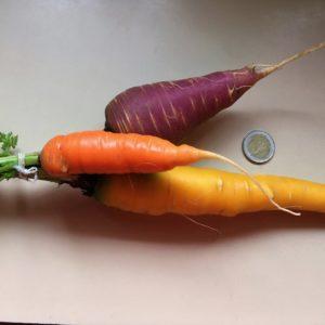 Karotten drei Farben Resch